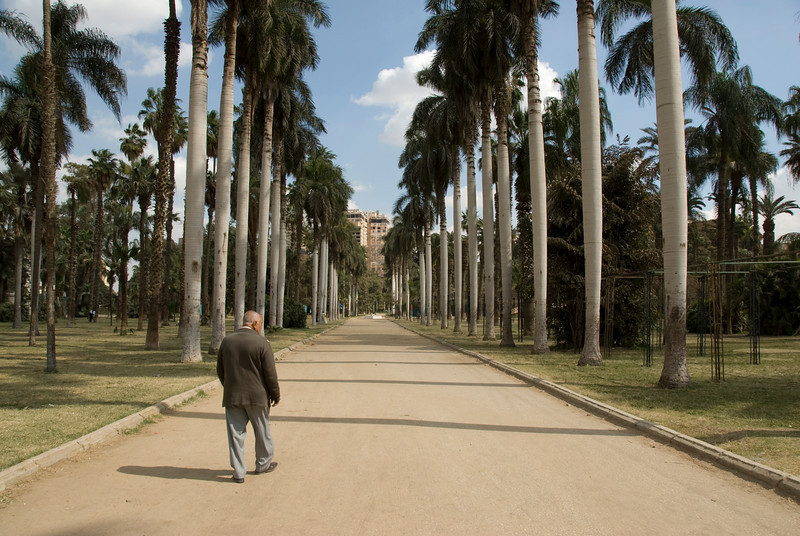 Tree lined path at the botanical garden - Cairo, Egypt