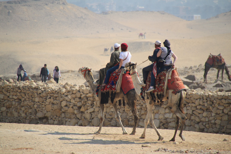 camels - guard - Pyramids at Giza