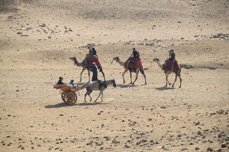cart and camels - horse carts - Pyramids at Giza