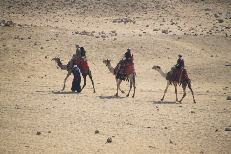 camels - horse carts - Pyramids at Giza