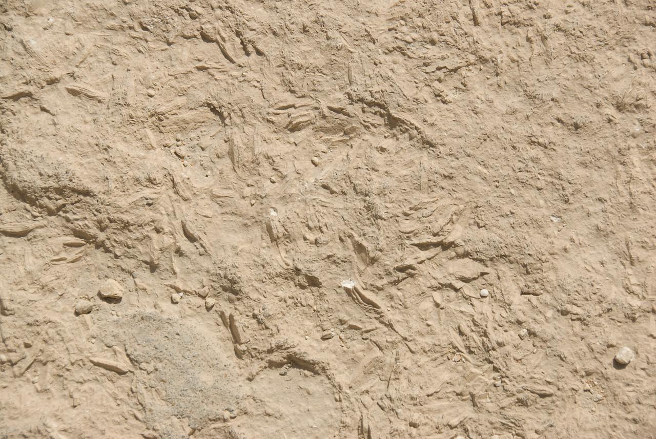 Fossils in Pyramid Blocks - Giza, Egypt