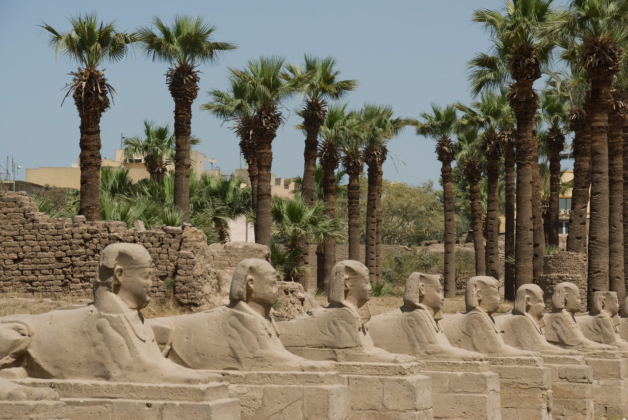 Sphinxes and Palm Trres inside Luxor Temple - Luxor, Egypt