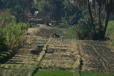 Farmers on rice field near the Nile River - Nile, Egypt