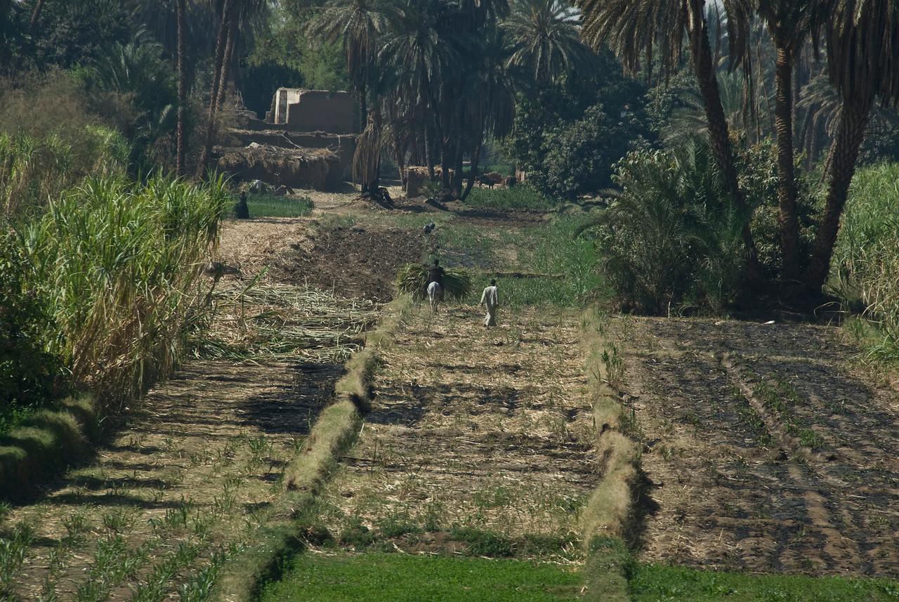 Farmers on rice field near the Nile River - Nile, Egypt