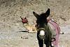 Camel and Donkey, Mount Sinai, Sinai Peninsula, Egypt.