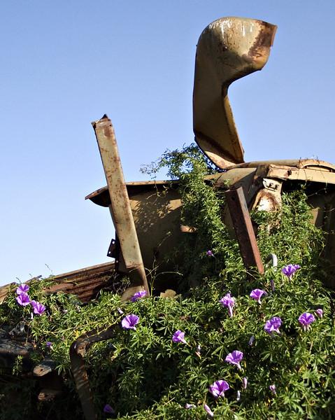 Vehicle graveyard, Asmara