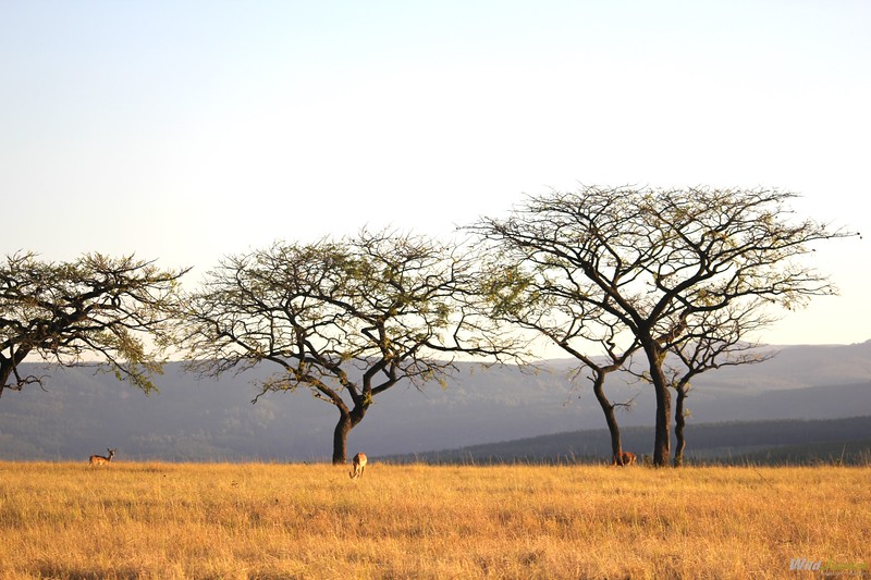 African Safari with Kids: My Complete Guide – Wild Junket Adventure