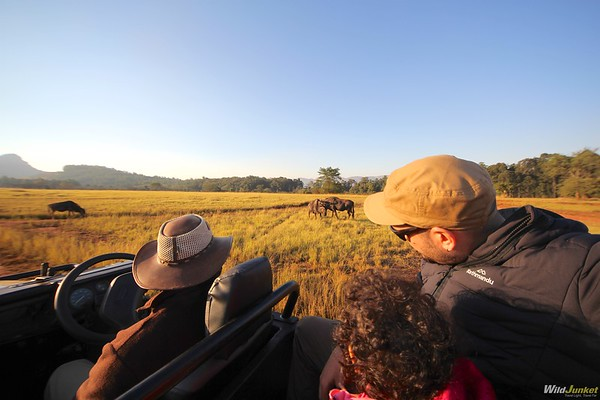 African Safari with Kids: My Complete Guide – Wild Junket Adventure