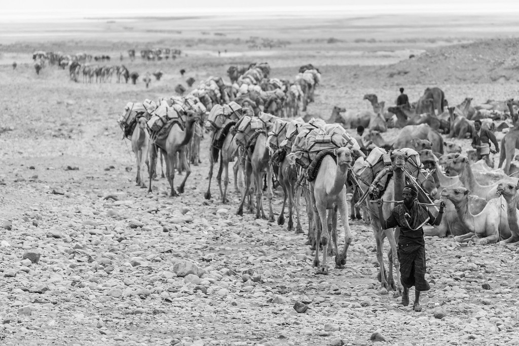 Afar Man With Camel Train, Hamed Ela