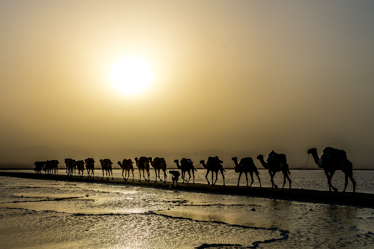 Salt caravan in the Danakil Depression, Ethiopia