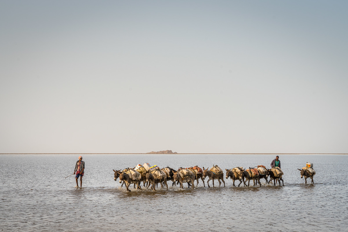 Donkey Caravan with salt
