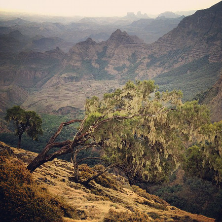 """Layers -- Simien Mountains, Ethiopia. Taken on an overcast afternoon, perfect to cast the canyons in relief. Gelada baboons -- technically not even baboons, but """"old world monkeys"""" -- hang out (quite literally) on the cliff's edge and amongst the trees. #mountainporn via Instagram http://ift.tt/1q9iP1P"""