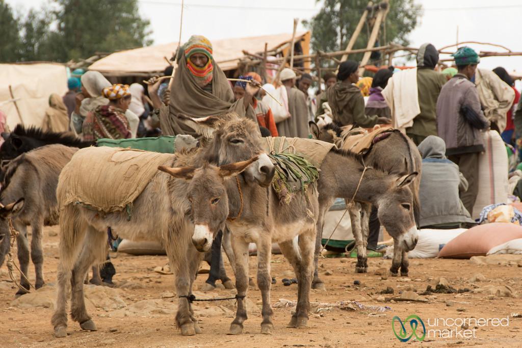 Snuggling Donkeys at Market - Lalibela, Ethiopia