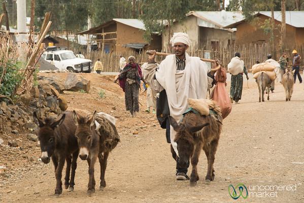 Donkeys to the Ethiopian Market - Lalibela, Ethiopia
