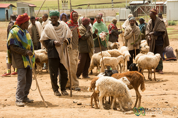 Selling Sheep at the Weekly Market - Lalibela, Ethiopia
