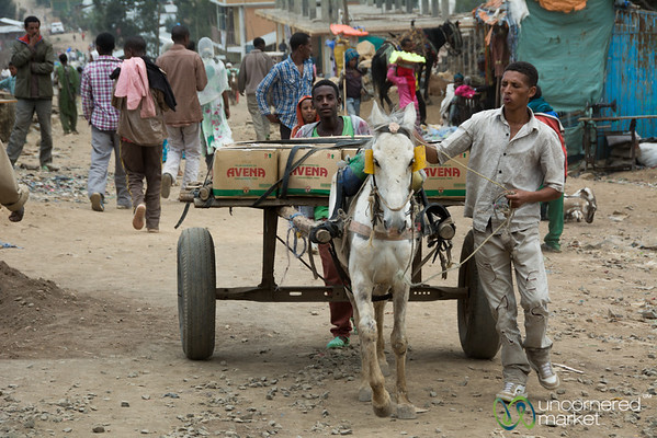 Horsecart at the Debark Market - Ethiopia