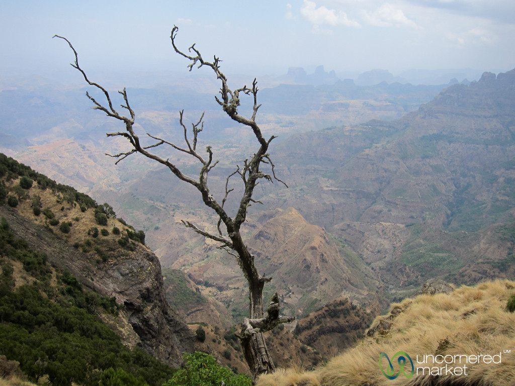A Lone Tree in the Simien Mountains, Ethiopia
