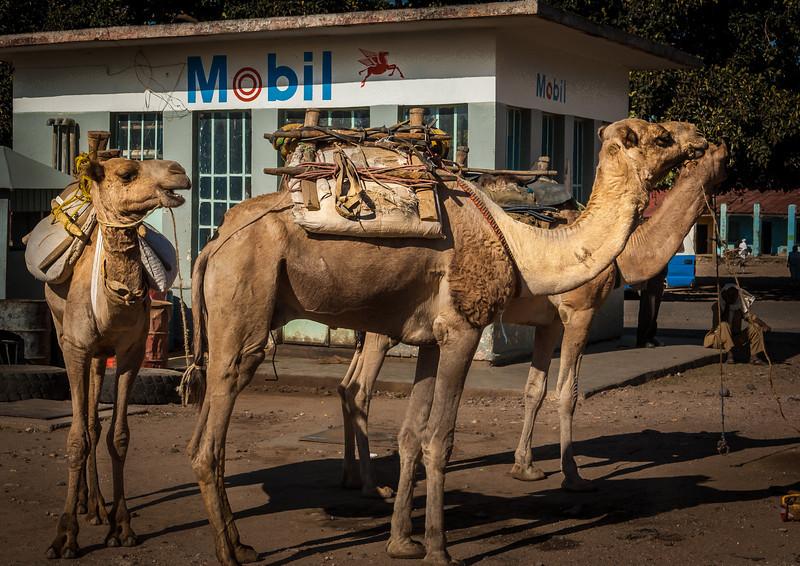 110_Auxum_Ethiopia__2006_040