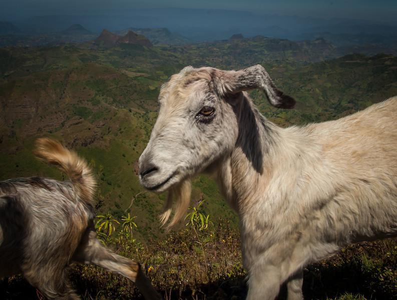 178_Gondor_Ethiopia__2006_061