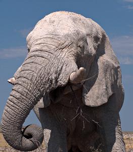Etosha NP, Namibia, September-October 2007