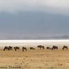 Lake Magadi - Negorongoro NP - Tanzania