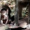 newborn baboon - Lake Manyara