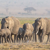 morning elephant march - Amboseli NP, Kenya-4