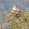 Secretary bird - Serengeti NP- Tanzania-6