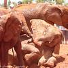 elephant playtime-5