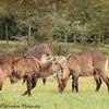 water buck - Lake Naivasha NP - Kenya-2