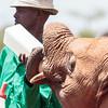 elephant feeding time-4