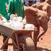 elephant feeding time-2