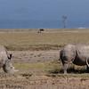 white rhino - Amboseli-4