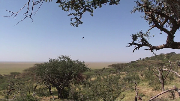 Video Diary #7 from the border of the NCA & the Serengeti (you may not be able to hear some of it due to the wind... sorry!)