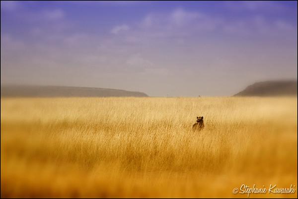 Lone hyena in Serengeti, Tanzania