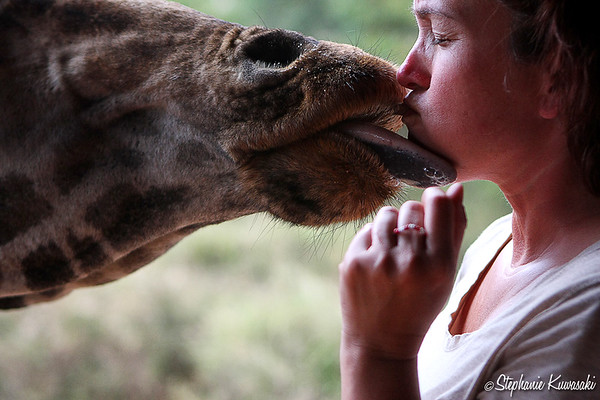 The kiss... Me w/Rothschild Giraffe at the Giraffe Center in Kenya