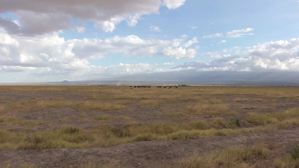 Amboseli scenery