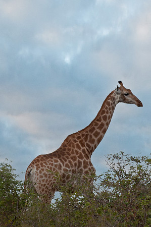 Part 1: (5 star pics) Travel to Africa and Safari
