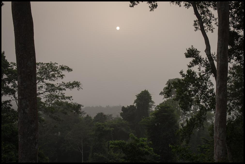 The sun through the Harmattan haze, Kakum national park