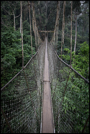 Canopy walk, Kakum national park