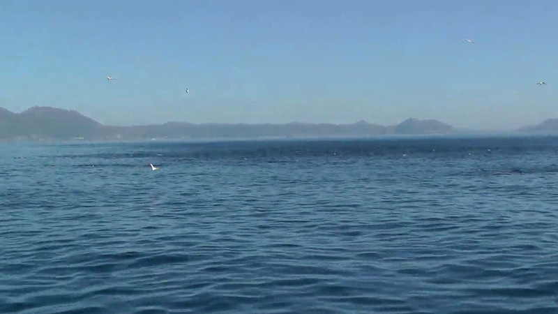 Dolphin encounter in False Bay, South Africa.  This pod of dolphin was chased by a pod of Orcas and took refuge in the bay.  The pod was literally hundreds of dolphin strong and also included a few humpback whales.
