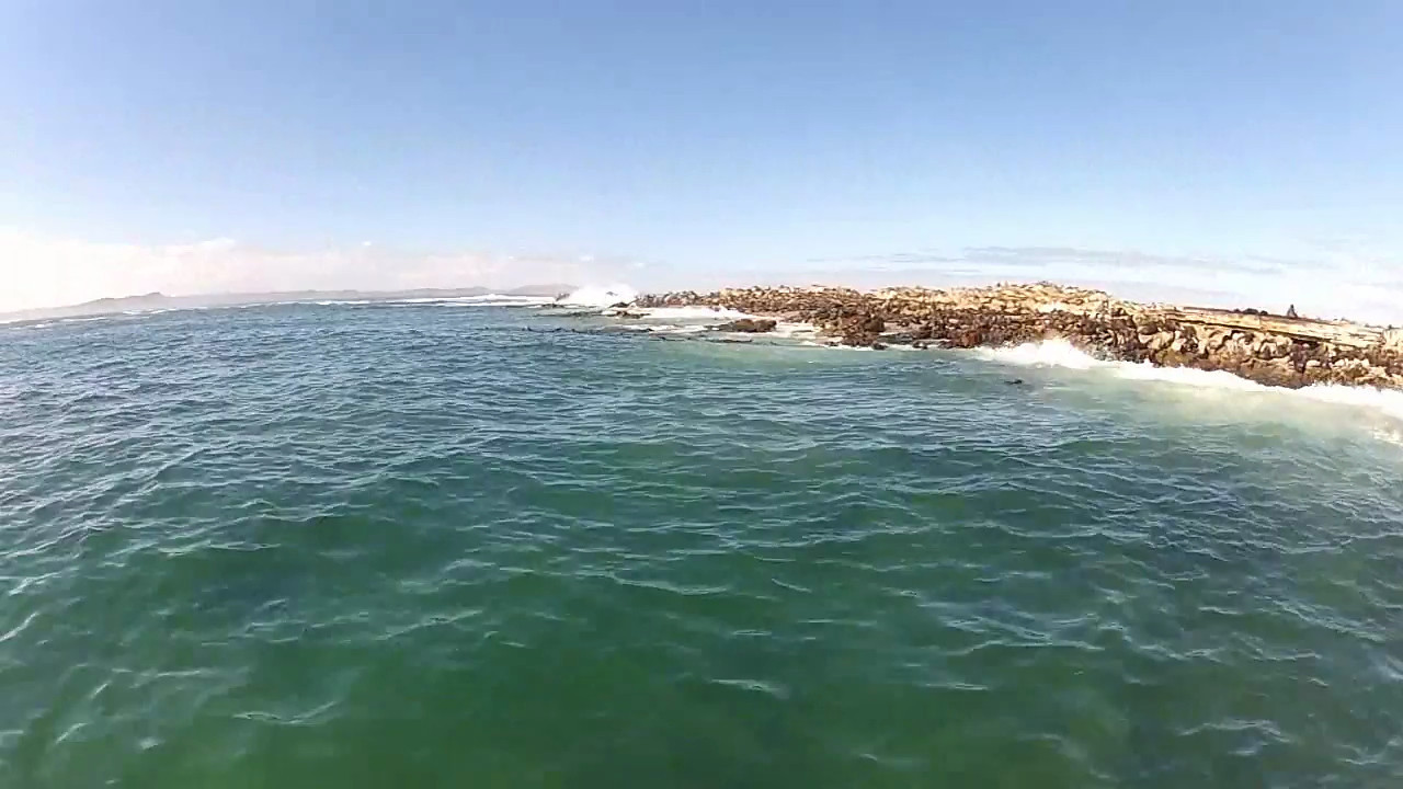 Cruising Gansbaai and Shark Alley