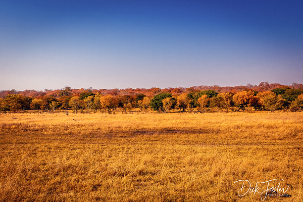 Dry River Bed Behind Hwange Safari Lodge