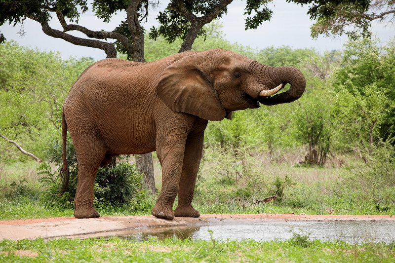 Elephant at Si Bon waterhole