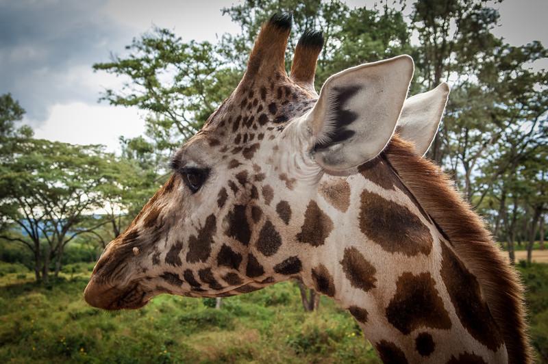 Nairobi_Kenya_2006_077