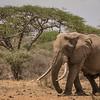 Bull elephant at Ol Donyo waterhole, Kenya