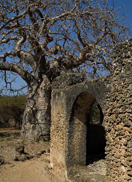 Mosque and baobab, Takwa