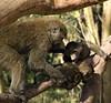 Baboons, Lake Nakuru NP
