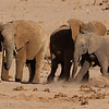 Smaller elephant being pushed away by a larger one for water, Samburu, Kenya