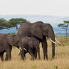 Elephants at Massai Mara